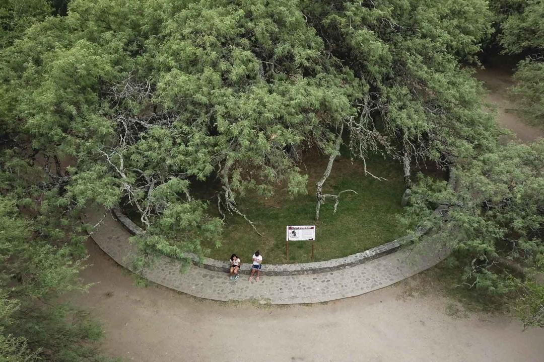 Algarrobo Abuelo |Visitar San Luis